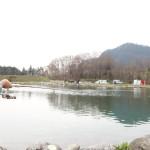 大芦川F&C で管釣り