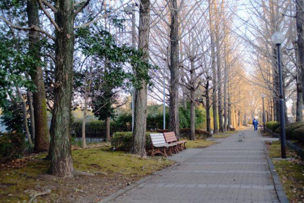 遊歩道とベンチ