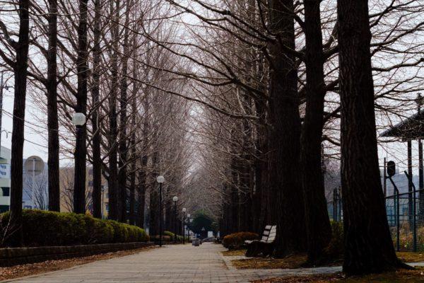 公園の遊歩道