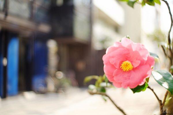 上野の路地