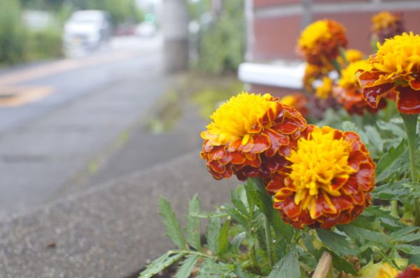 Super Takumar 24mm F3.5 花