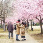 G.Zuiko 40mm f1.4 と桜と大道芸
